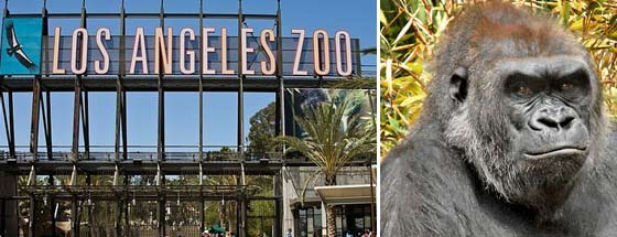 La Zoo Coupons 2019 Jobs Hotels Info And More